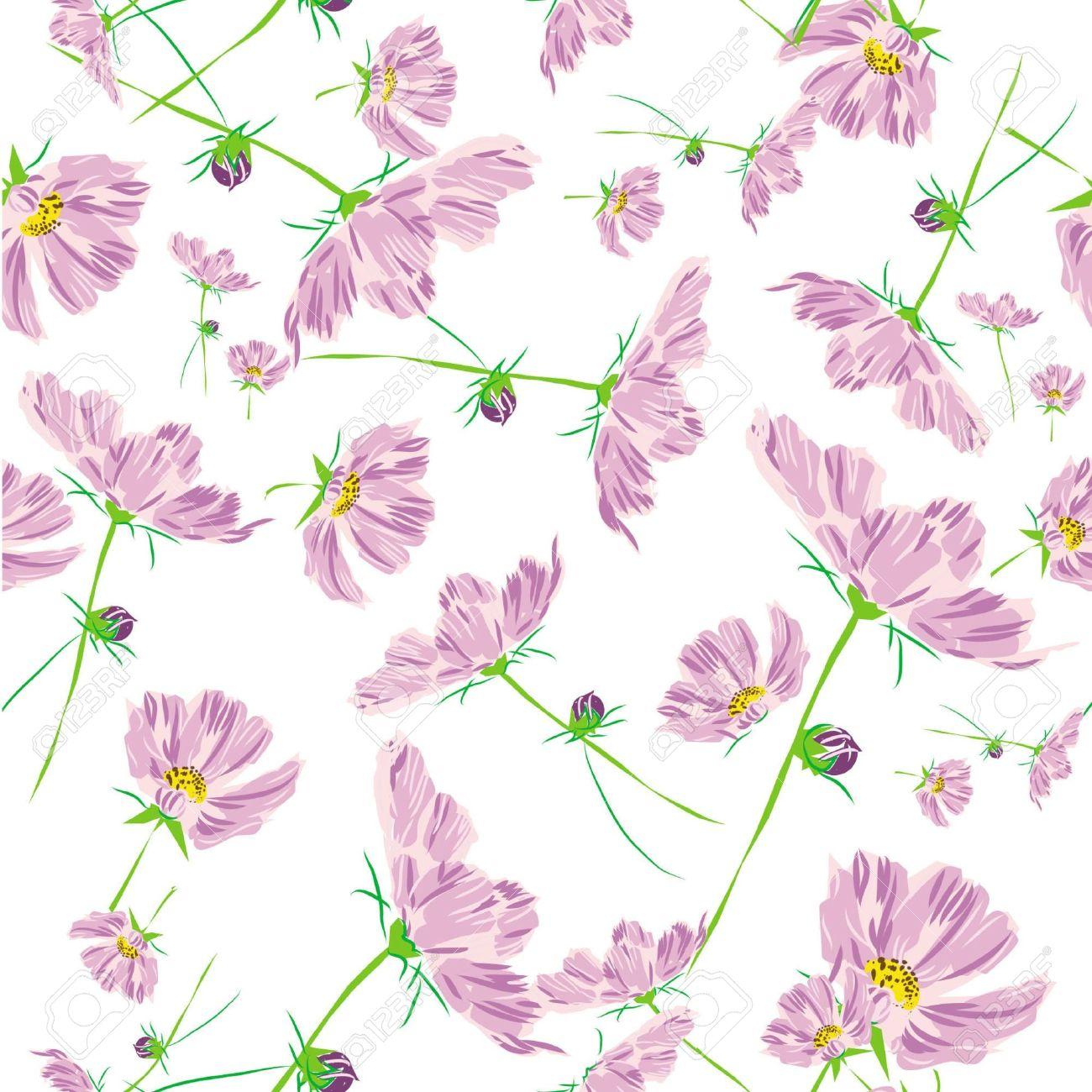 Rosa Cosmos Patrón De Flores Aisladas Sobre Fondo Blanco