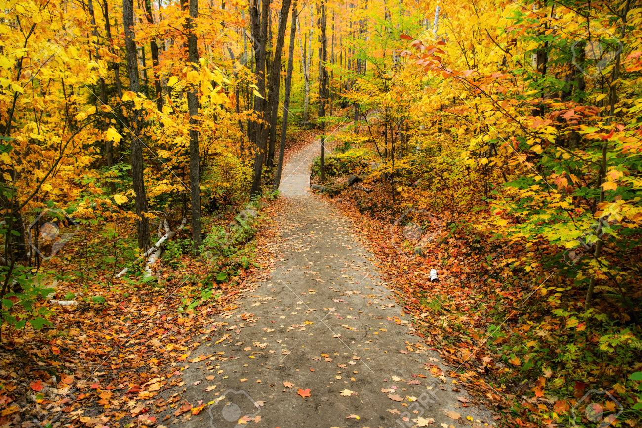 f237904d9f A path running through a forest with colorful leaves during the..