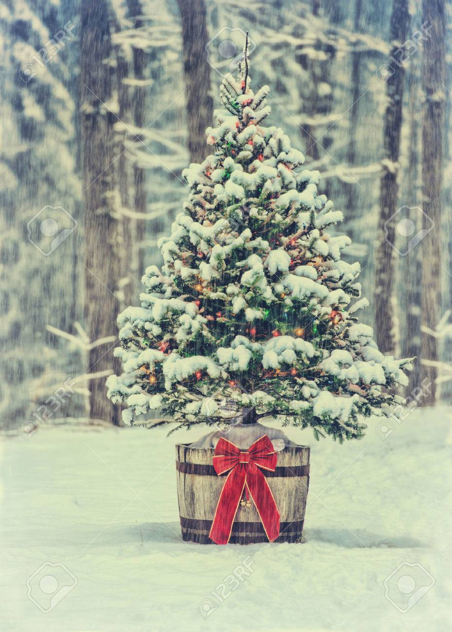 A Snow Covered Natural Spruce Christmas Tree With Illuminated Stock Photo Picture And Royalty Free Image Image 36622663