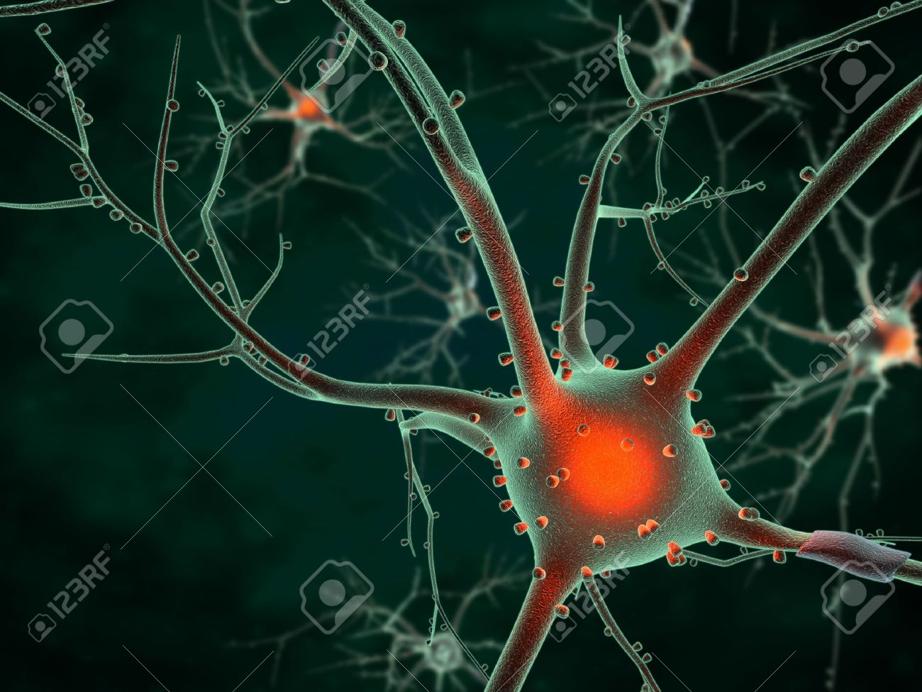 3D rendering of neurons in the brain Stock Photo - 12340035
