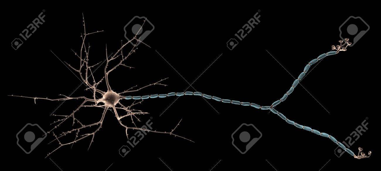 Neuron Close_up Stock Photo - 12741208