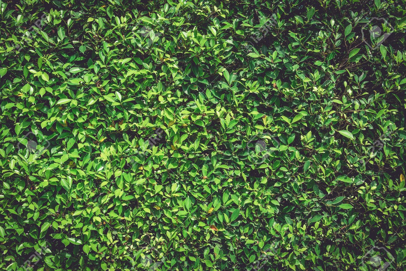 Green Wall Nature Plant Background Tree Texture And Wallpaper