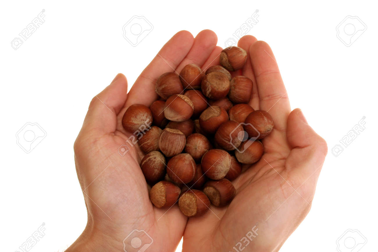 image of hands holding hazelnuts over white background Standard-Bild - 1489477