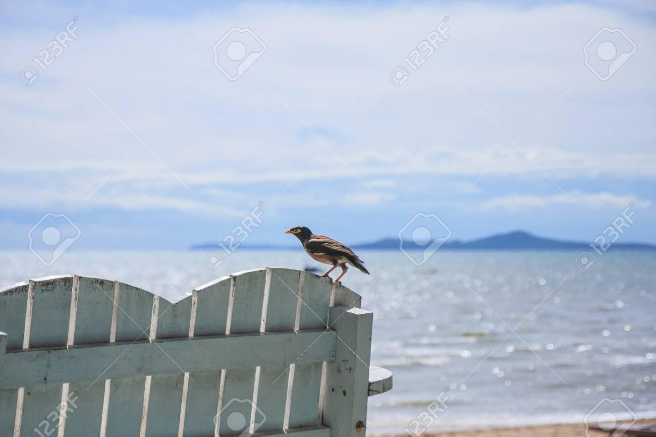 myna bird resting on bench by the beach - 23982093