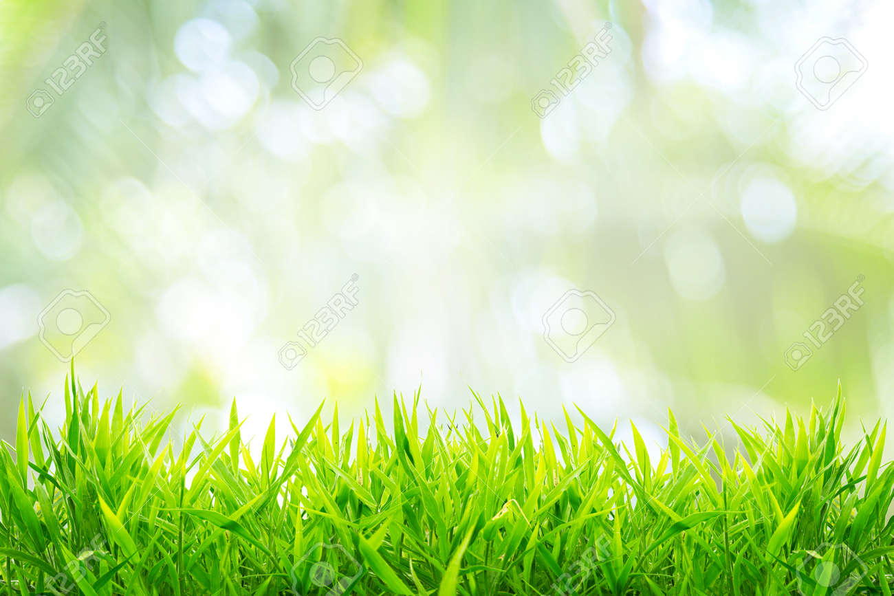 Spring or summer and grass field with sunny background - 145247224