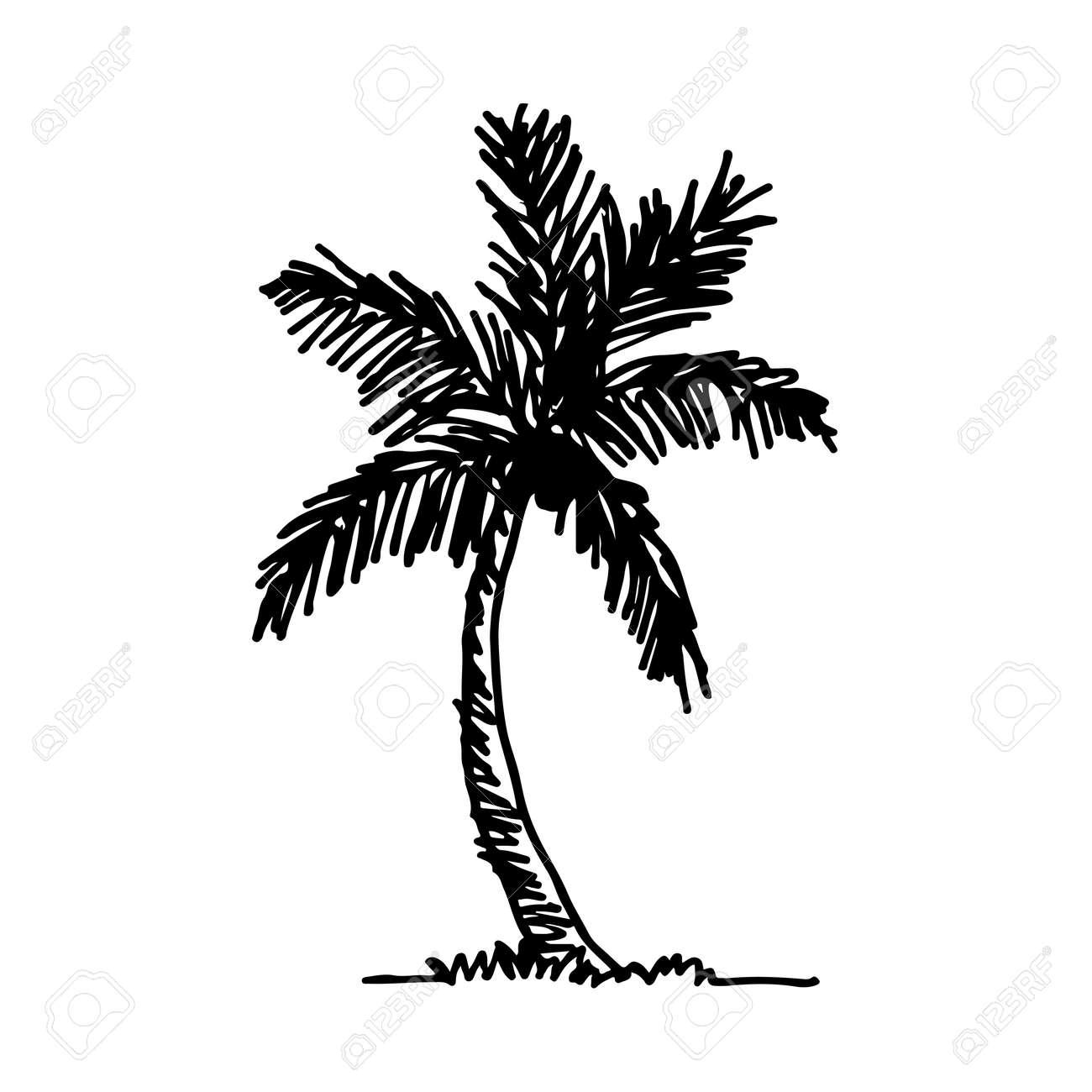 Doodle Icono De árbol De Coco Mano Dibujar Diseño De Ilustración ...