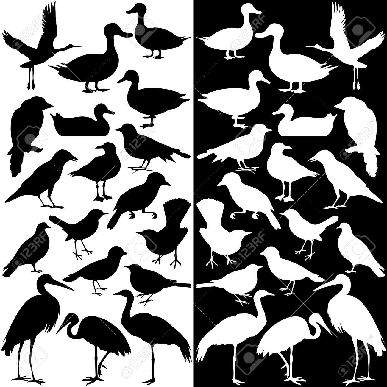 a collection of birds silhouettes black and white royalty free