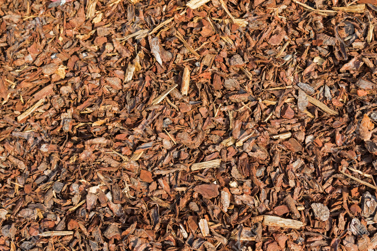 garden bark. Texture Of Coarse Dried Pine Bark Nuggets Ideal For Topping Garden Bed To Retain Moisture Stock