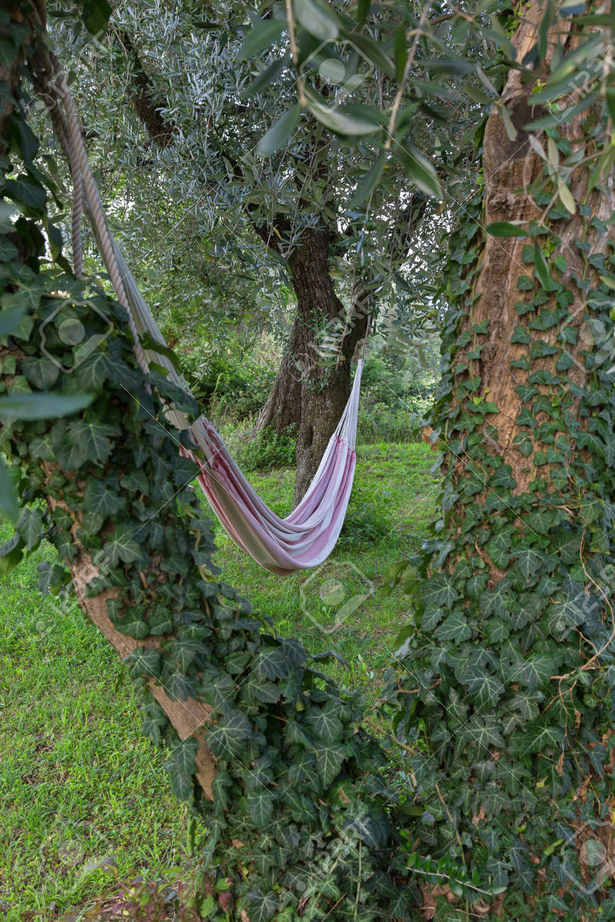 to rope a tie hammock tree tying up how