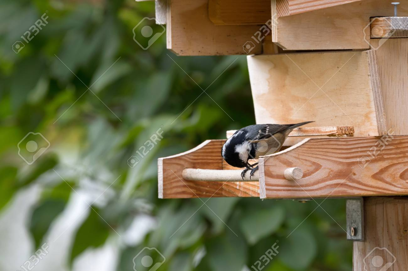 can bird where yellow hang see feeder it up a you