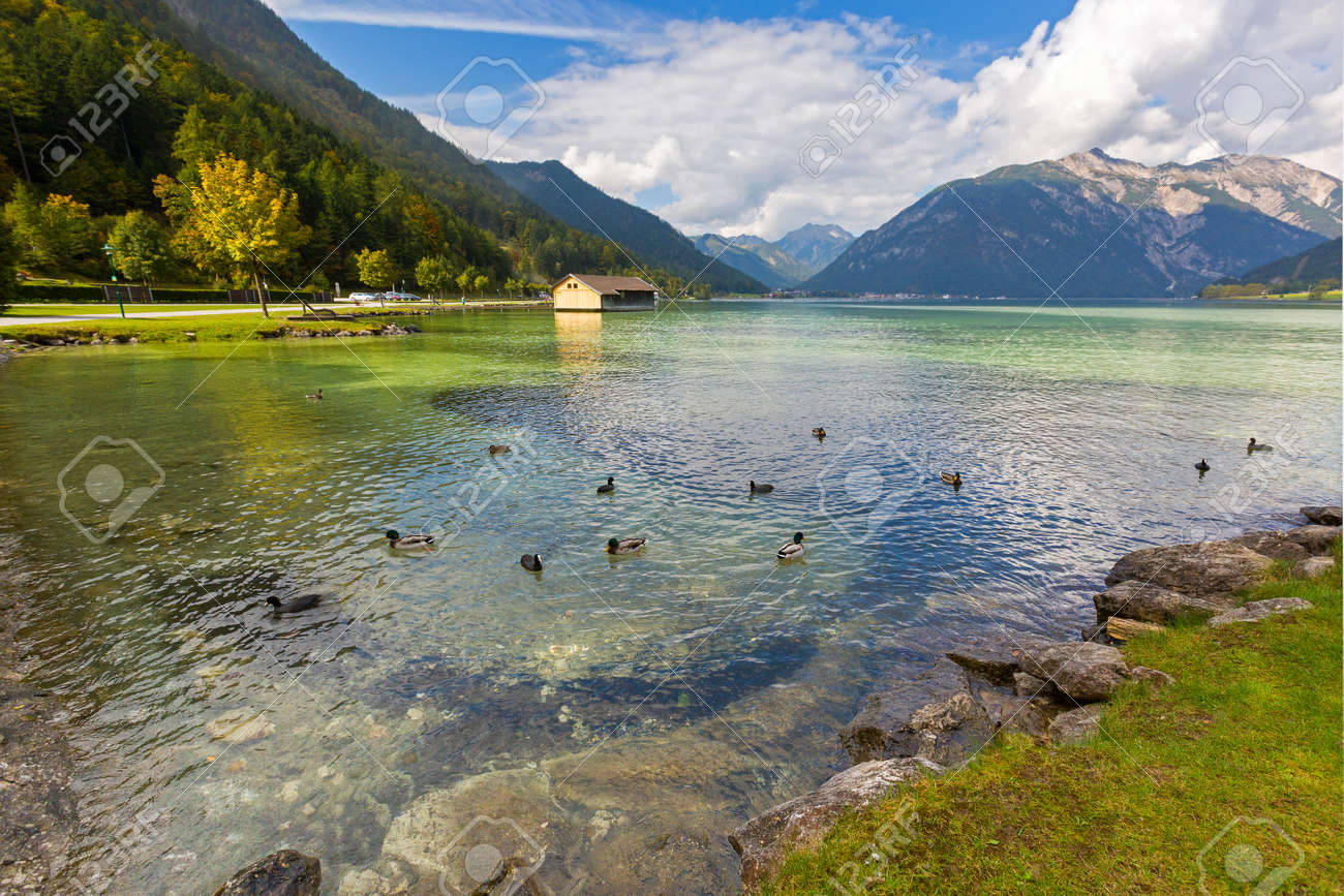 Mallards, Coots swimming in crystal clear lake water of Achensee