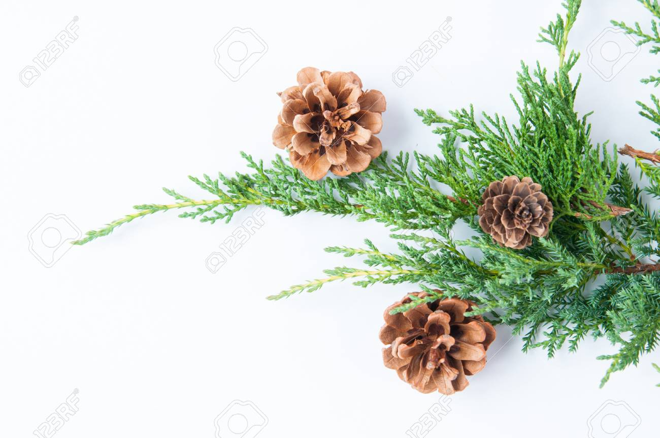 Christmas Greenery Images.Christmas Greenery With Pine Cones