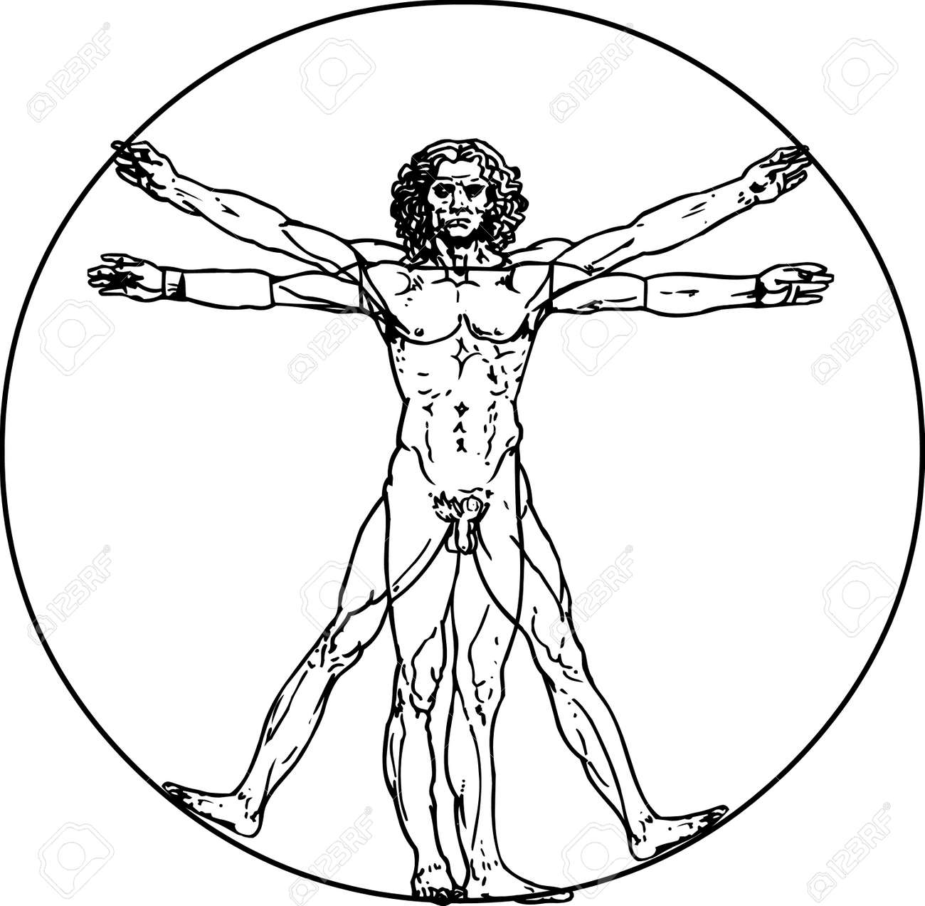 Leonardo Da Vinci\'s Vitruvian Man In Vector Royalty Free Cliparts ...