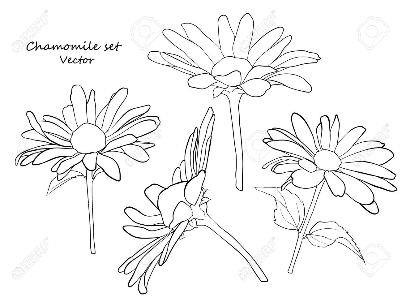 Floral Contour Set Of Daisies A Set For Drawing Up Flower Arrangements Royalty Free Cliparts Vectors And Stock Illustration Image 159860711
