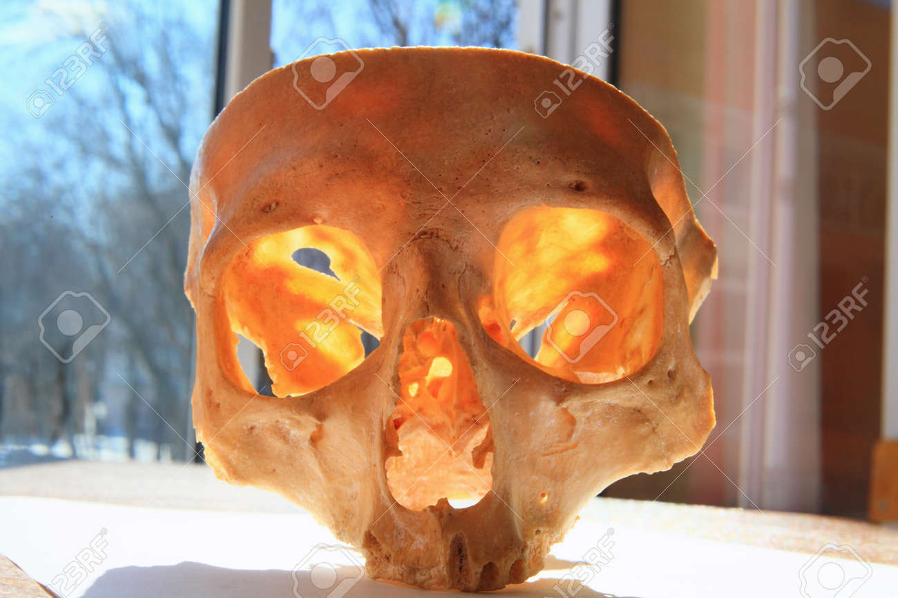 The skull of the man photographed close up of the classroom at the chair of anatomy Stock Photo - 17589412