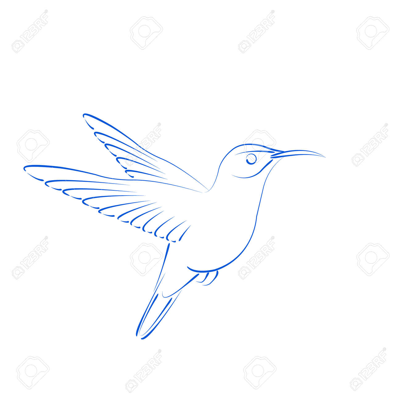 sketched hummingbird colibri isolated on white background design