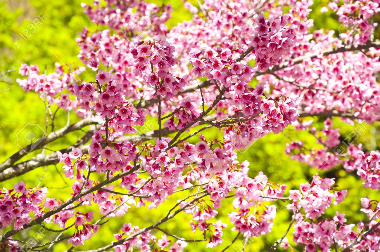 Asiatische Pflanzen asiatische pflanzen hausdesign pro