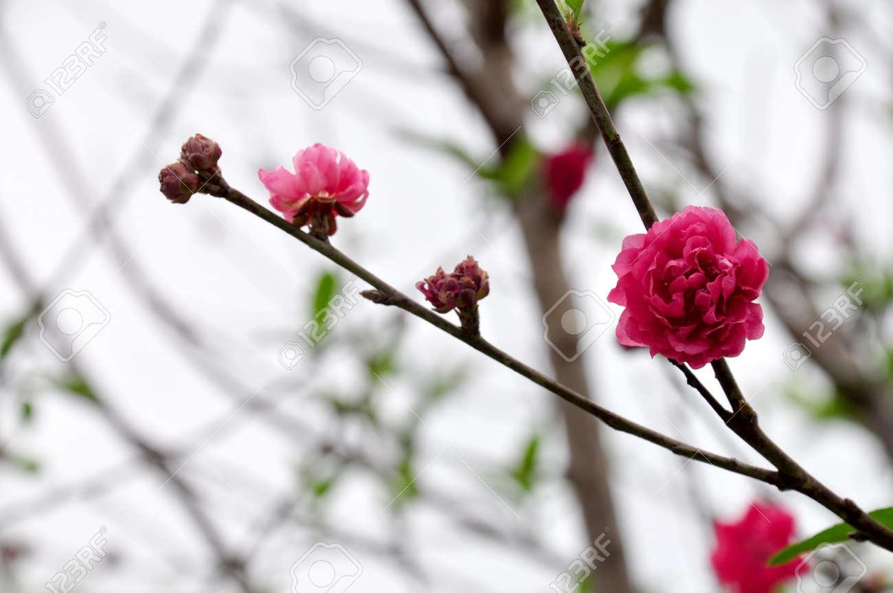 Taiwan Asiatique Parc Naturel Exterieur Fleur Rouge Rose Noir En