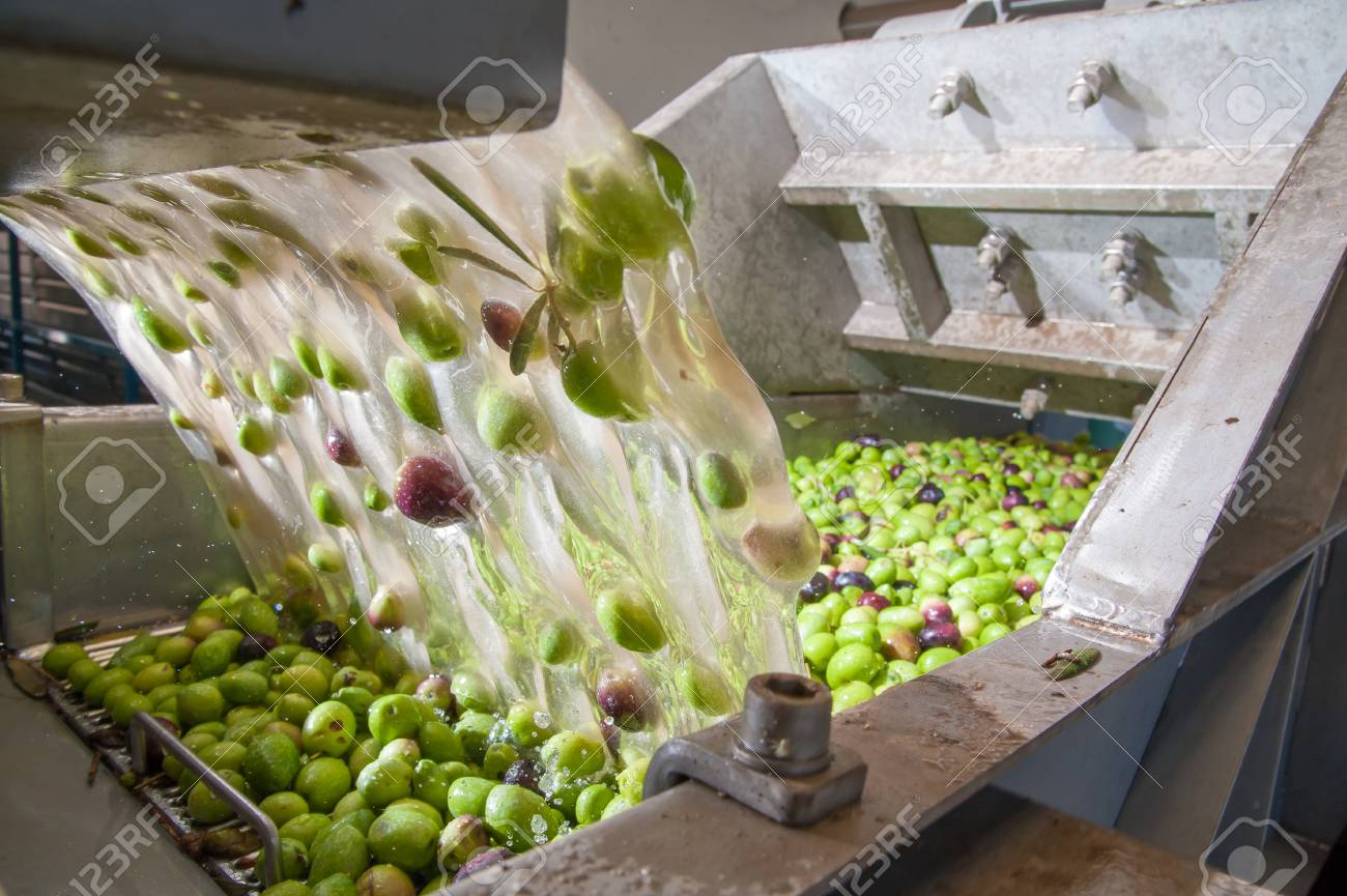 The process of olive washing and defoliation in the chain production of a modern oil mill - 88861771
