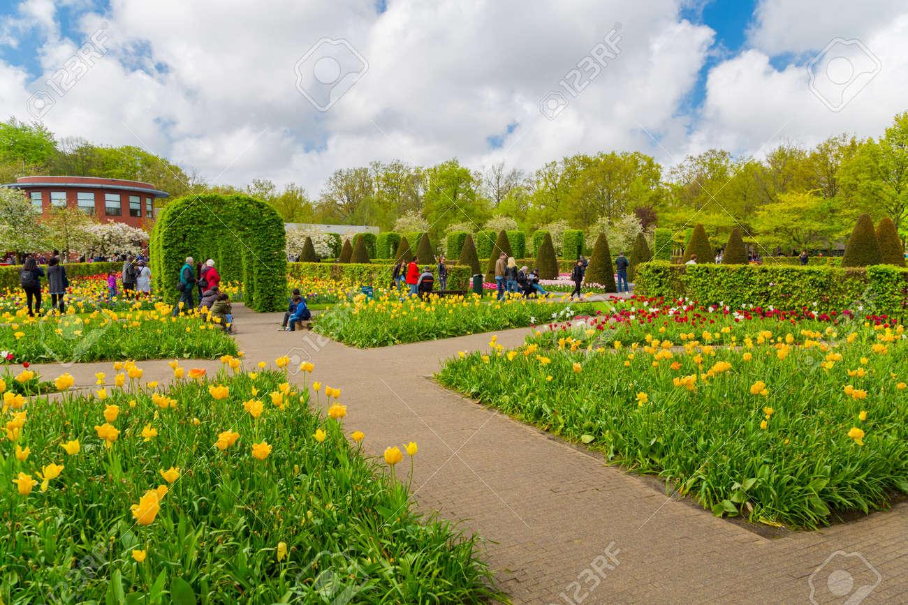 Lisse, Pays Bas   7 Mai 2016: Plate Bande De Tulipes Colorées Au Printemps.  Tulipes Colorées Dans Le Jardin De Keukenhof, Pays Bas Pays Bas.