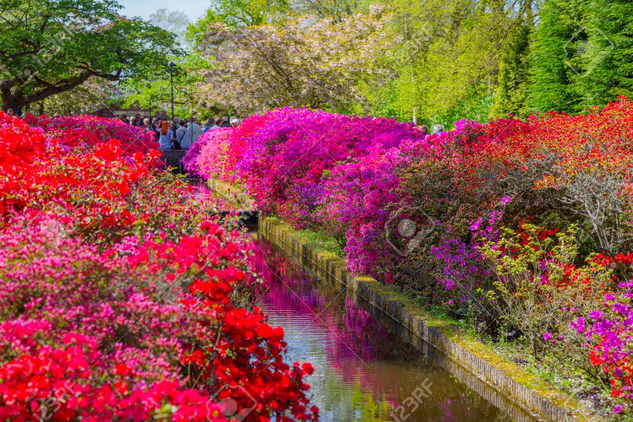 Parc De Keukenhof, Pays-Bas. Plate-bande De Tulipes Colorées Au ...