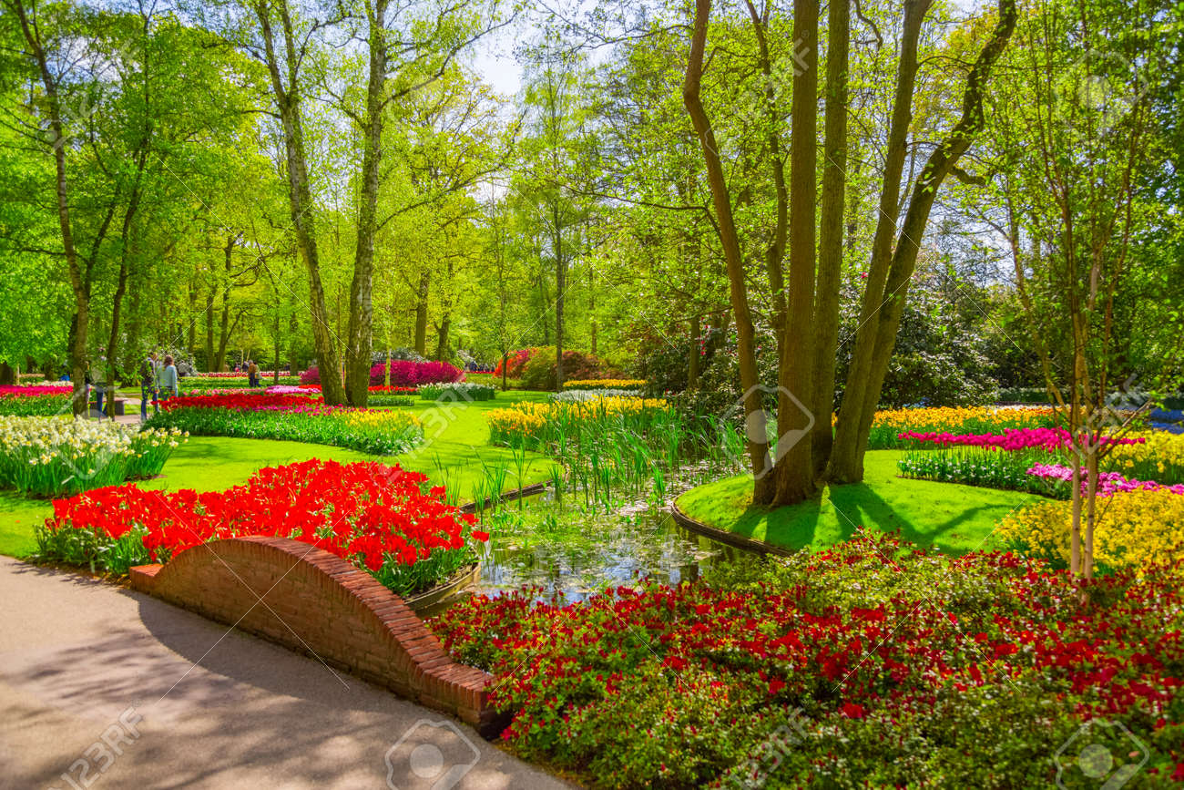 Tulipes Fleuries Fraîches Dans Le Jardin De Printemps. Champ De Fleurs De  Tulipe. Plate Bande De Tulipes Colorées Au Printemps.