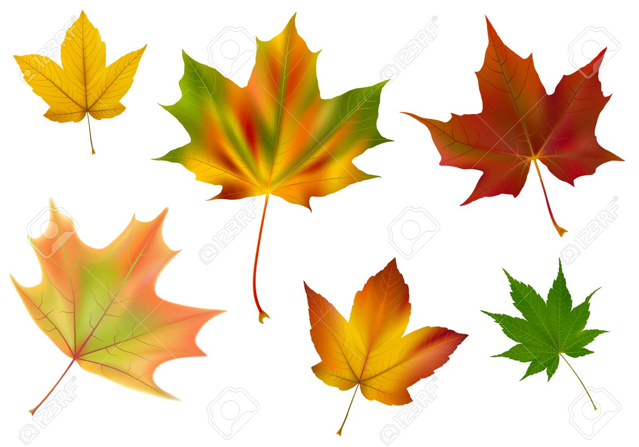 Diverse vector maple leaves. A few different species, colors and shapes. Made with gradient mesh. Stock Vector - 5607681