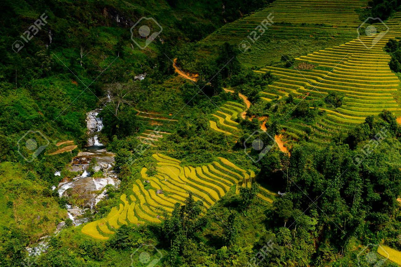 Paisaje De La Naturaleza Y Terraza De Arroz Del Norte De Vietnam