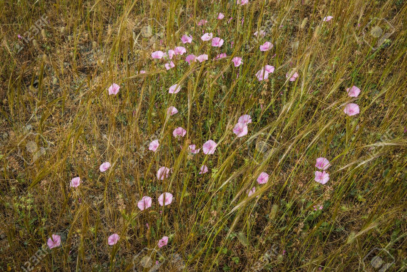 Image Of Beautiful Summer Flowers Pelion Greece Stock Photo
