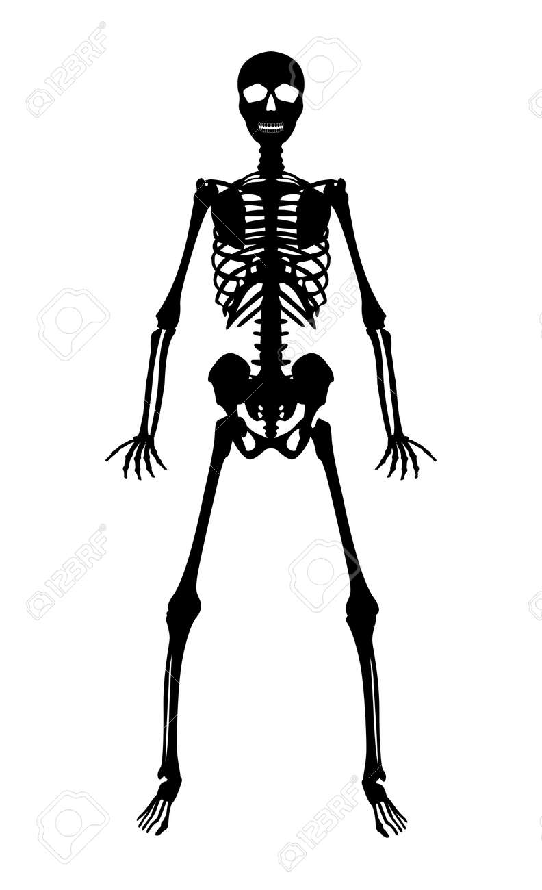 Schattenbildschwarzes Menschliches Skelett Auf Weißem Hintergrund ...