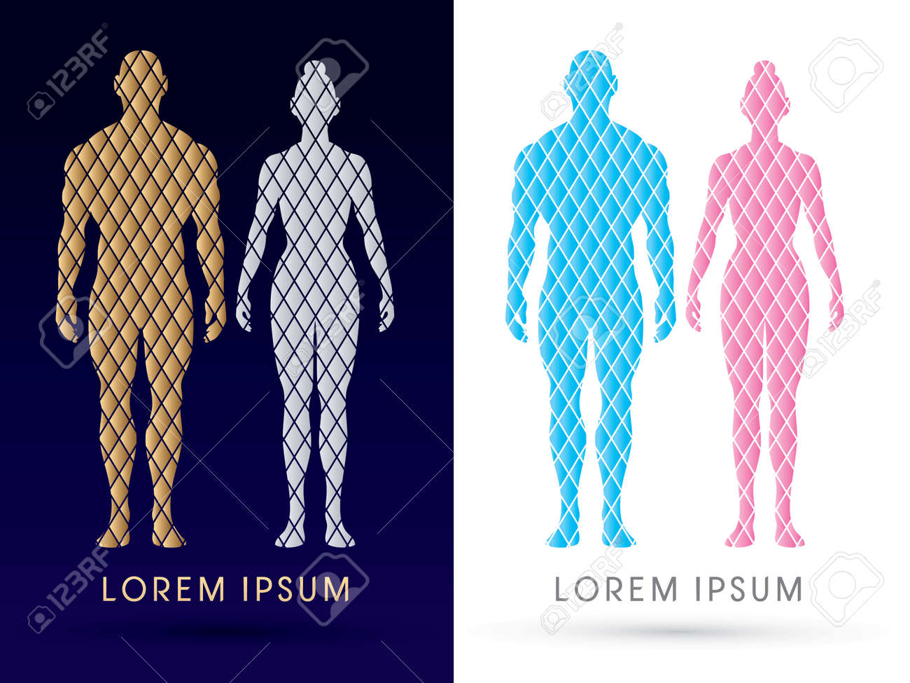 Male And Female Anatomy, Human Body, Full Body, Designed Using ...