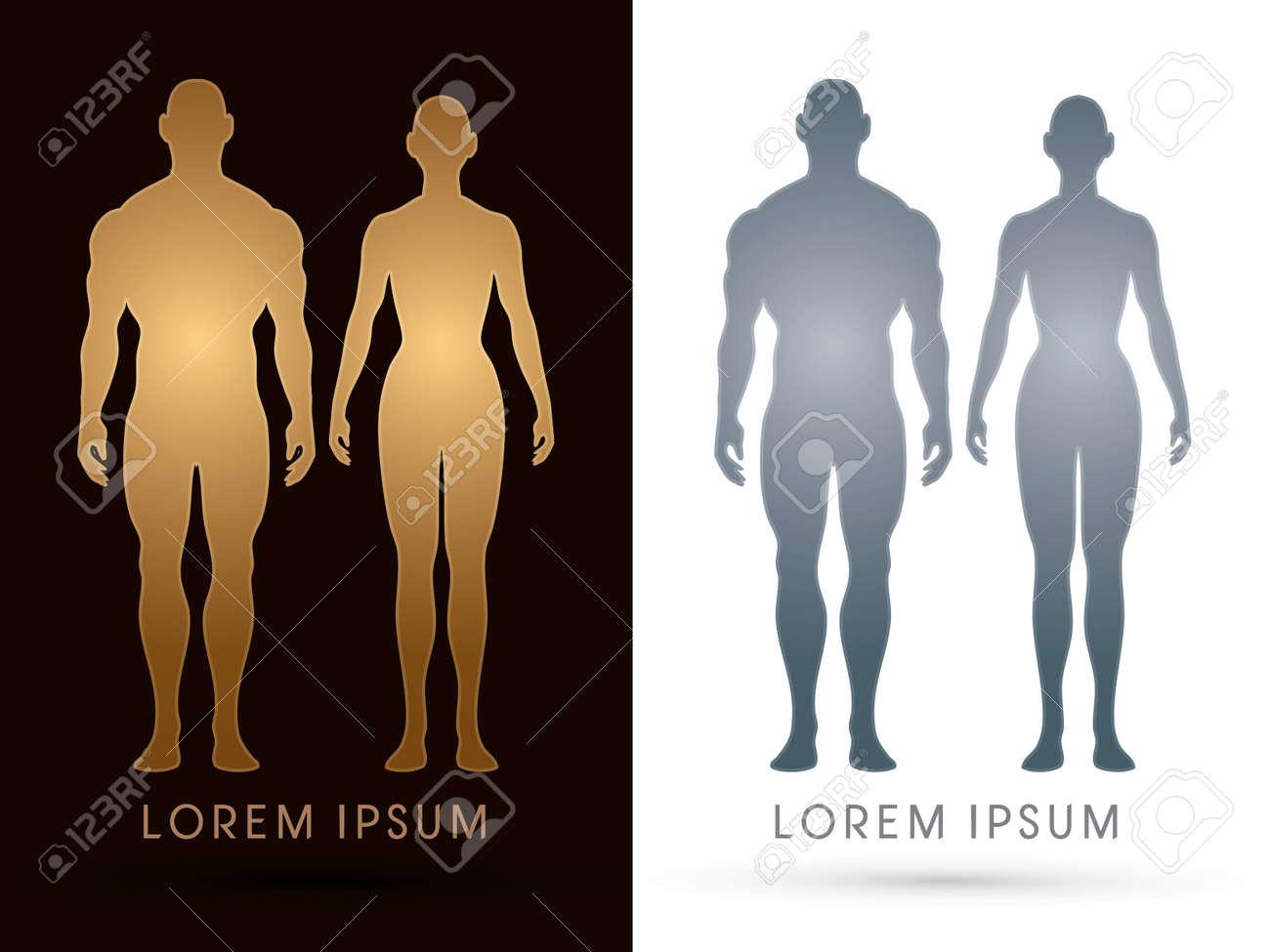 Varón Y Hembra Anatomía, Cuerpo Humano, De Cuerpo Entero, Diseñados ...