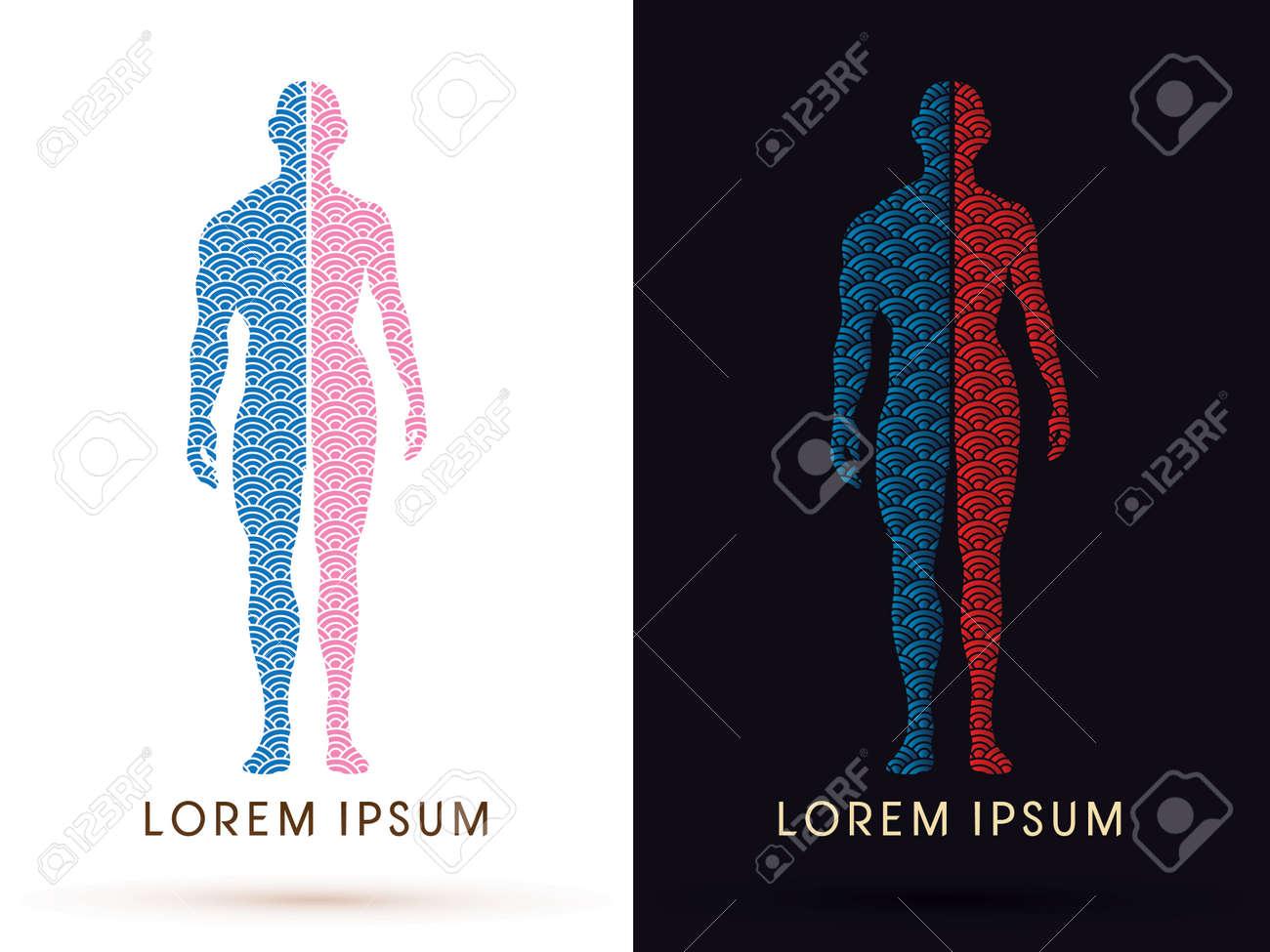 Halb Körper, Männliche Und Weibliche Anatomie, Mit Wasser Linie ...