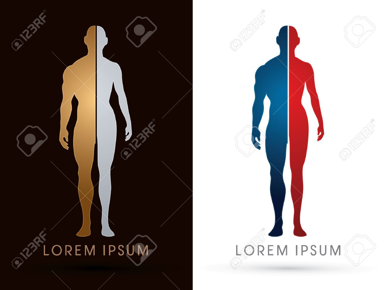 Silhouette, Half Body , Male And Female Anatomy, Graphic Vector ...