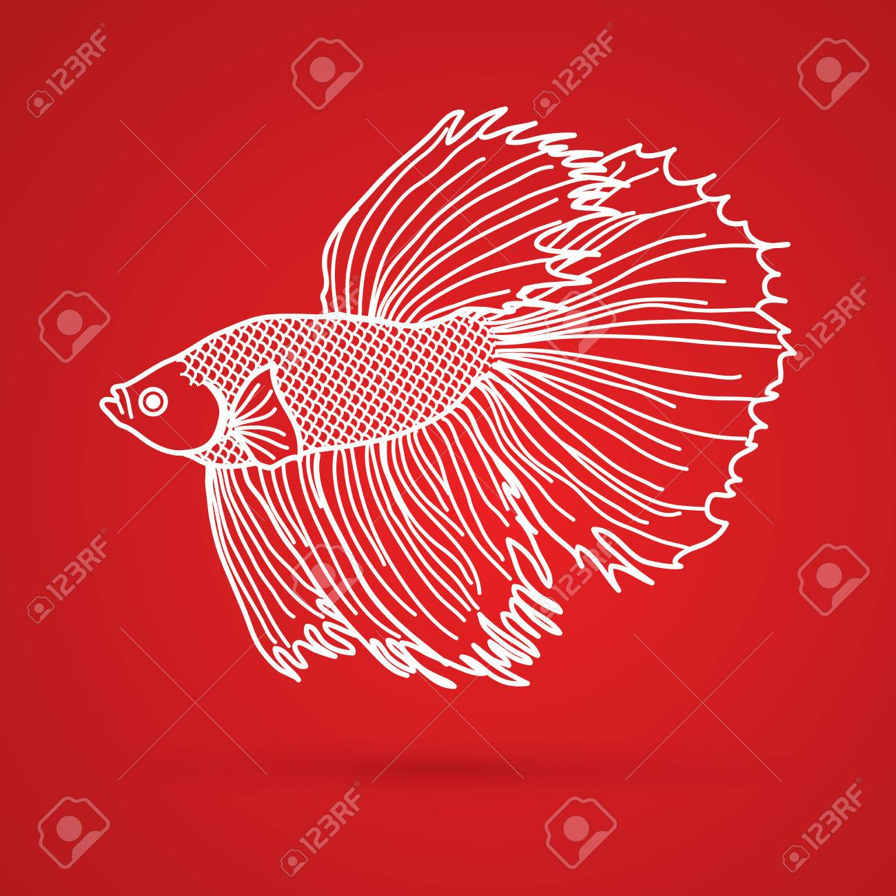 Siamese Fighter Fish Outline Graphic Vector. Royalty Free Cliparts ...