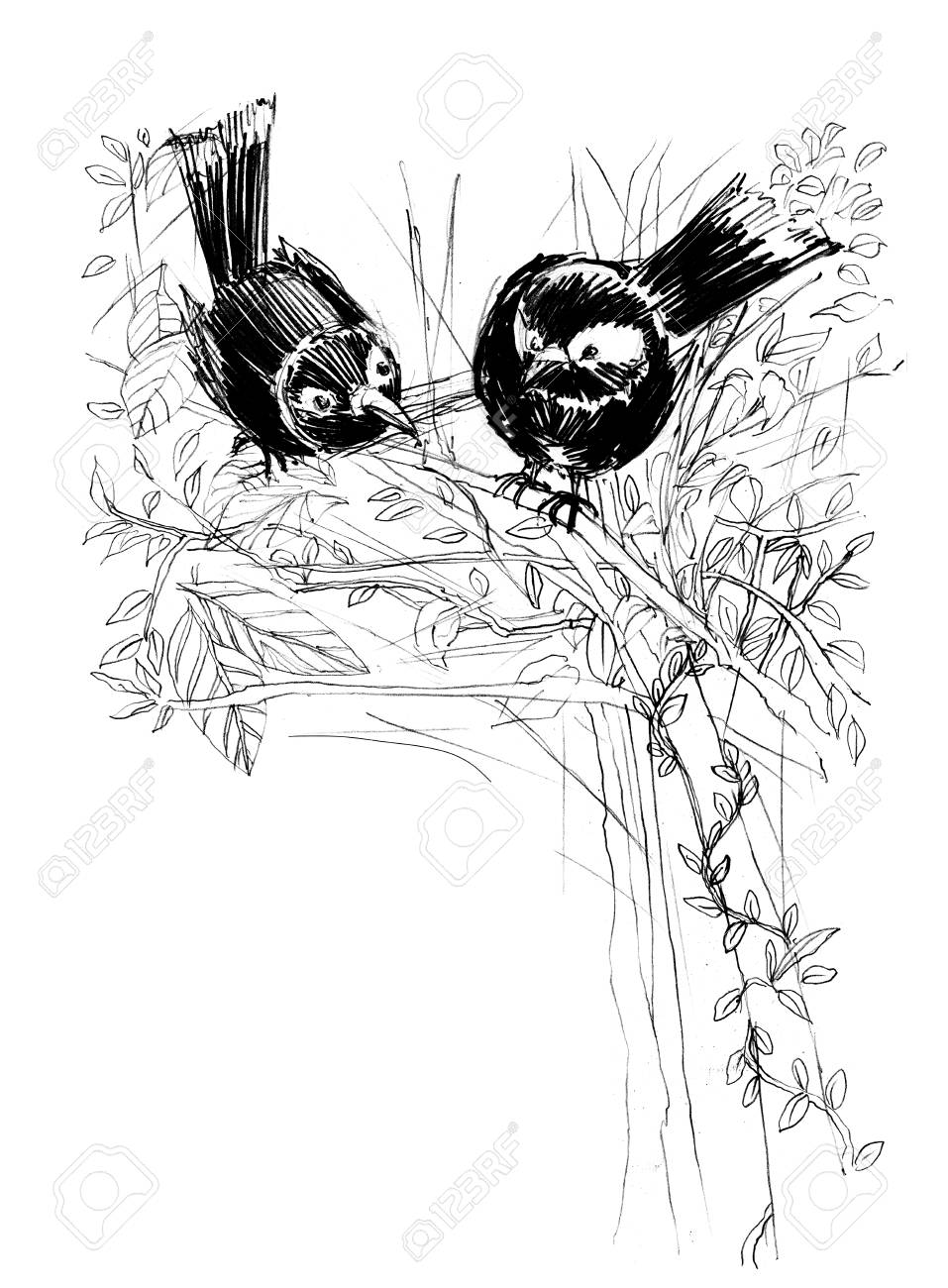 Magpie bird with love cute acting design pencil sketch from real life black and white color