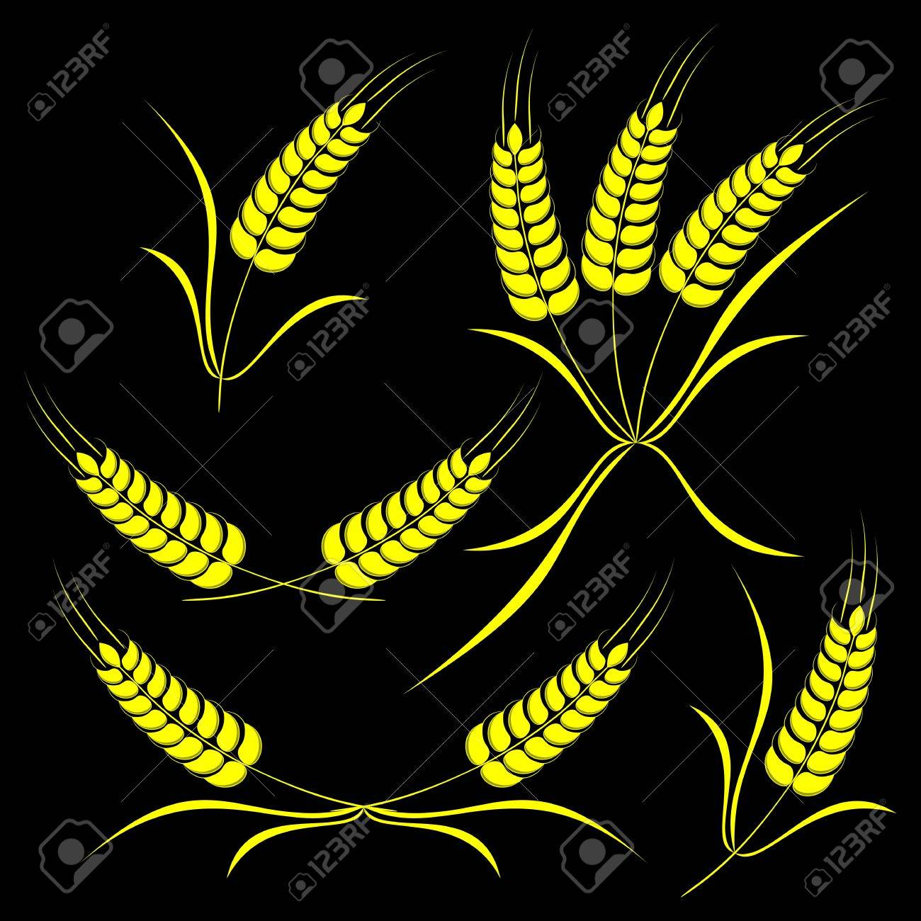 Set of the isolated ears of wheat on a black background. Stock Vector - 12203430