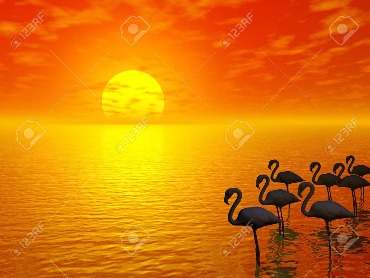 orange sunset and flamingos silhouettes Stock Photo - 845207