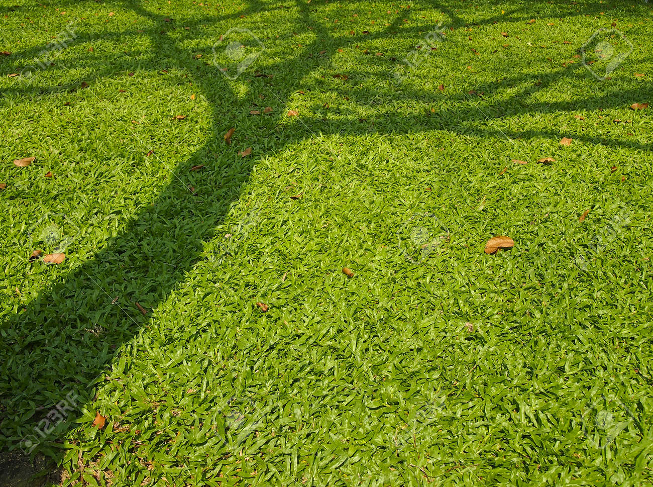 image of shadow tree on lawn in park Stock Photo - 19023196