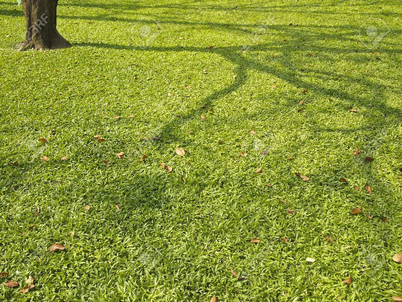 line of shadow tree on lawn in park in daytime Stock Photo - 25347788