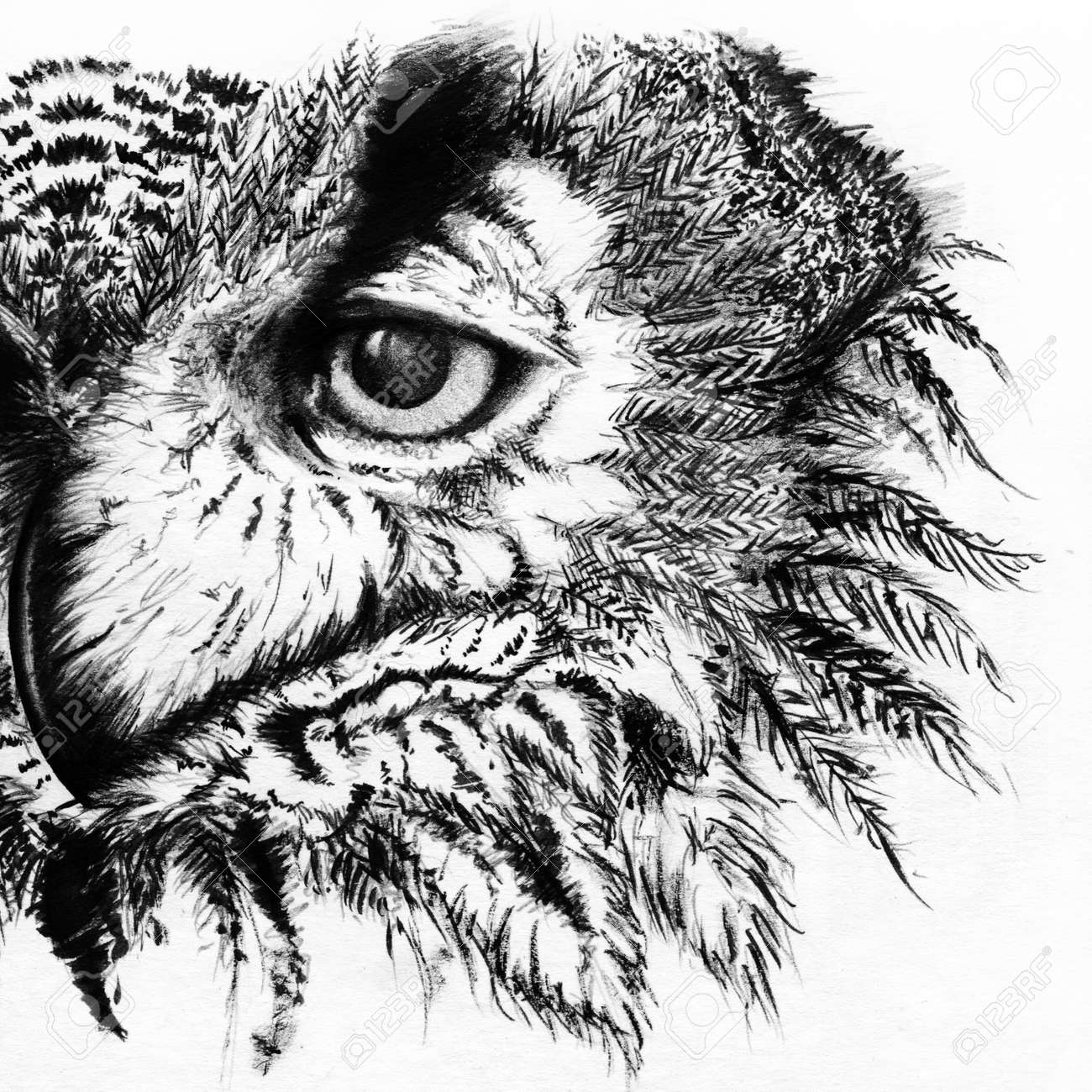 Monochrome black and white owl ink line art sketch