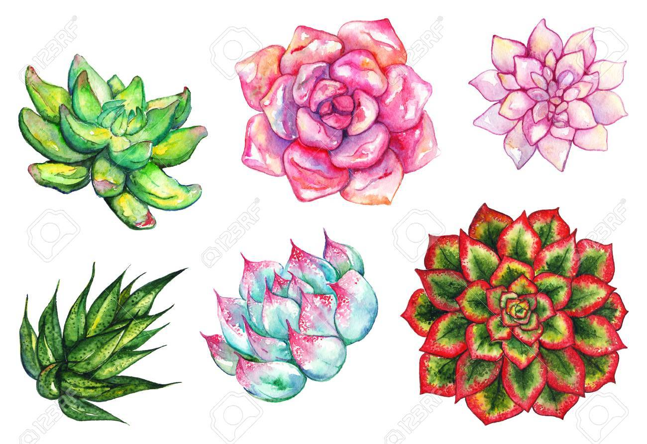 Stock photo watercolor succulent cactus flower plant hand drawn set isolated