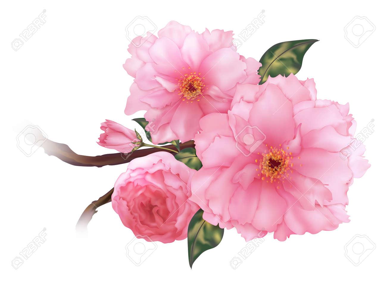 3 D のリアルなピンク桜さくらの花 Bのイラスト素材ベクタ Image