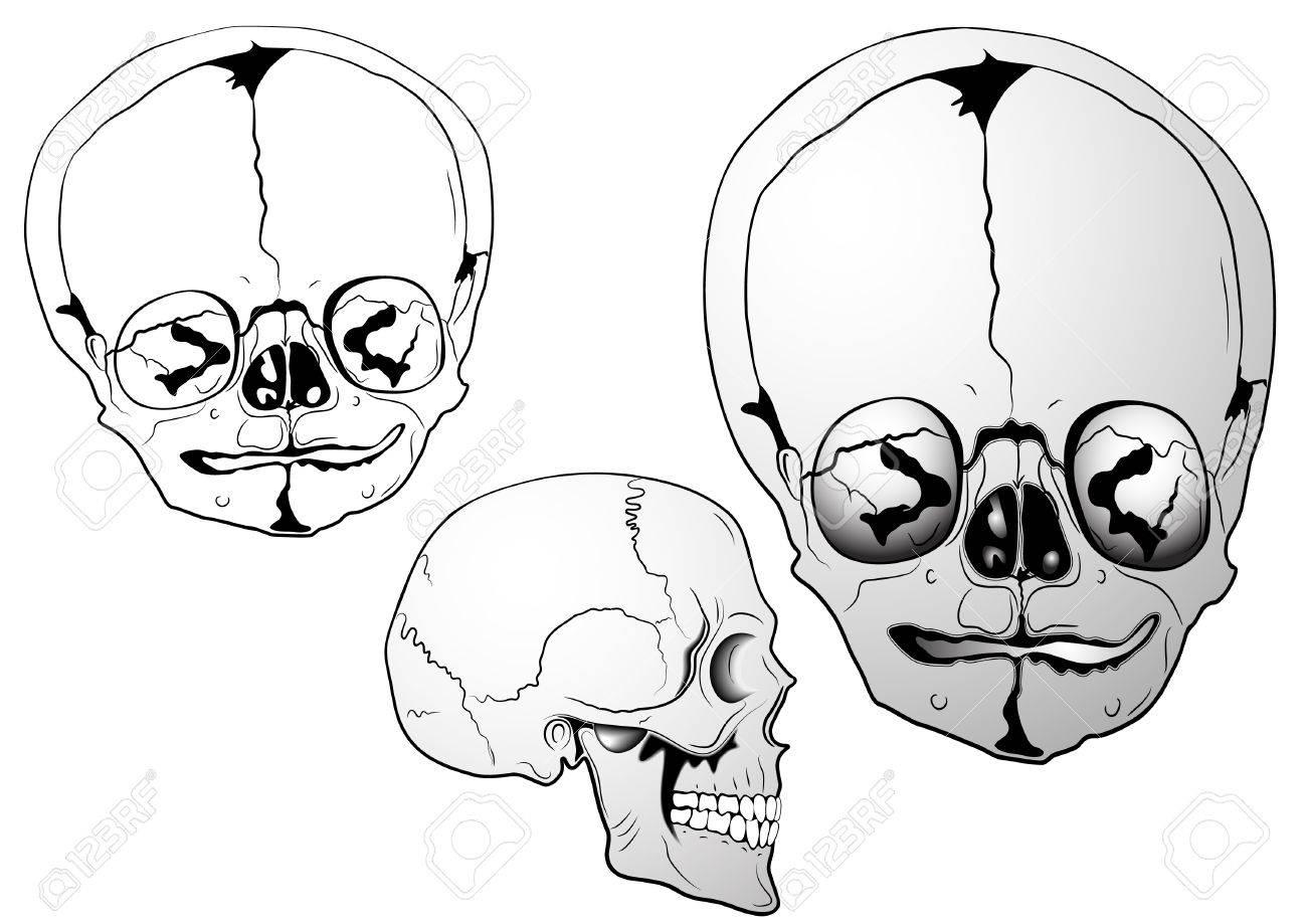 illustration - various bizarre sculls Stock Vector - 7293031