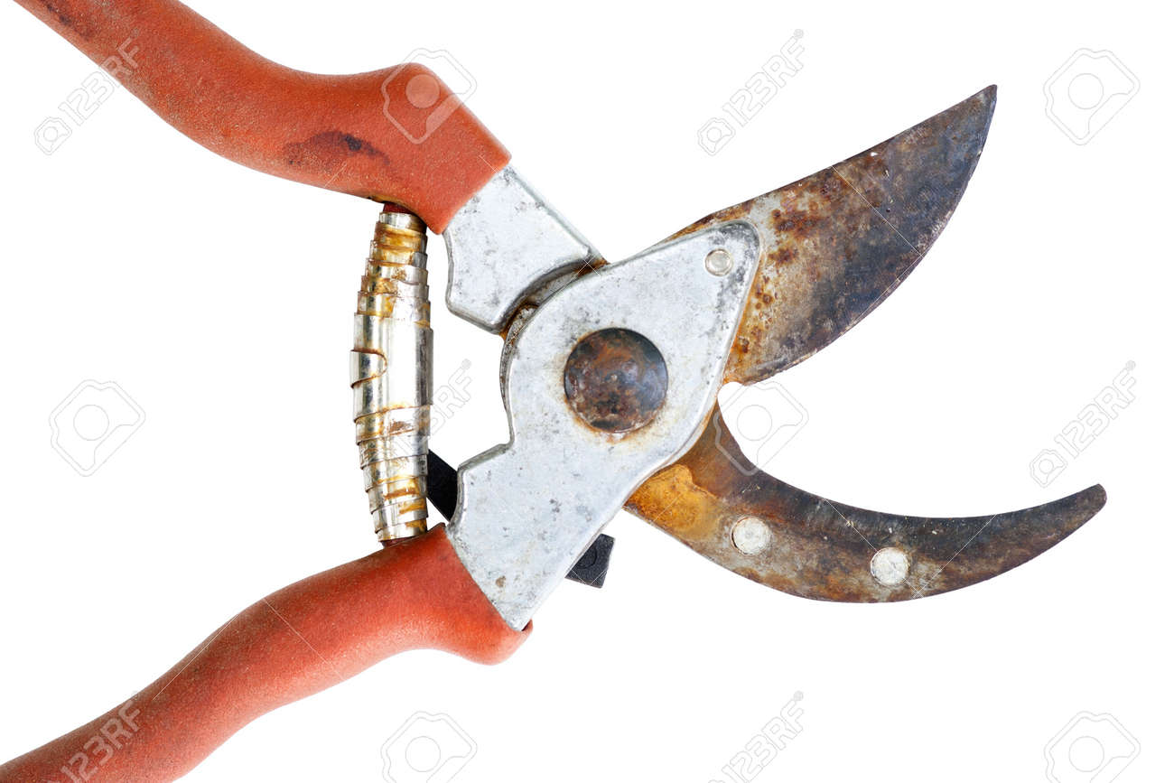 Old Rusty Clippers Garden Shears Stock Photo Picture And