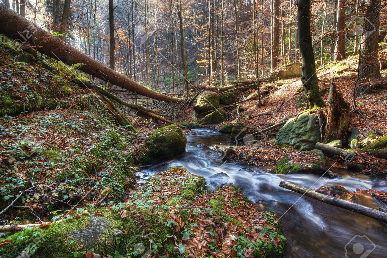 brook in abandoned forest Stock Photo - 15286551