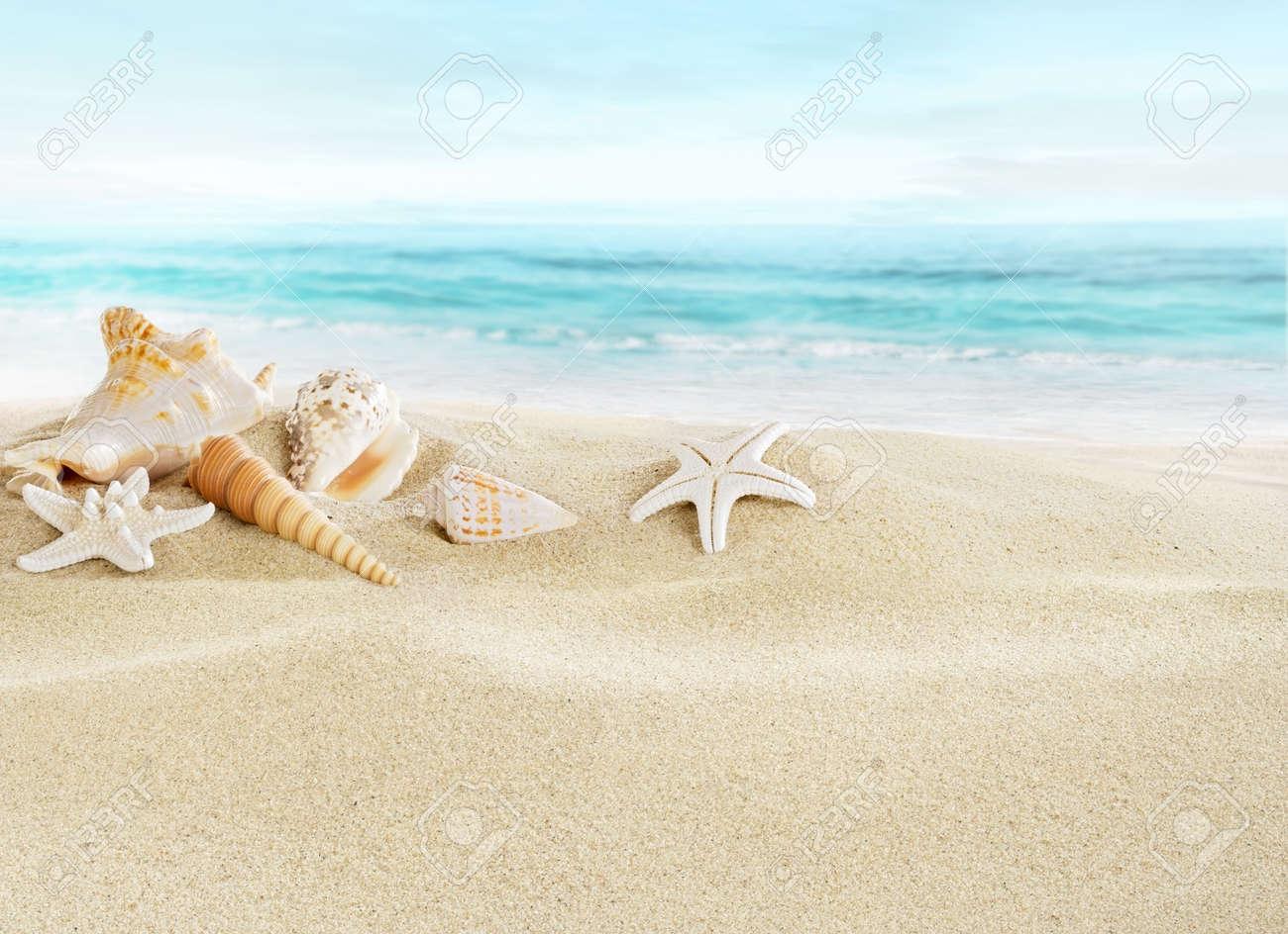 Shells on sandy beach Stock Photo - 20010910