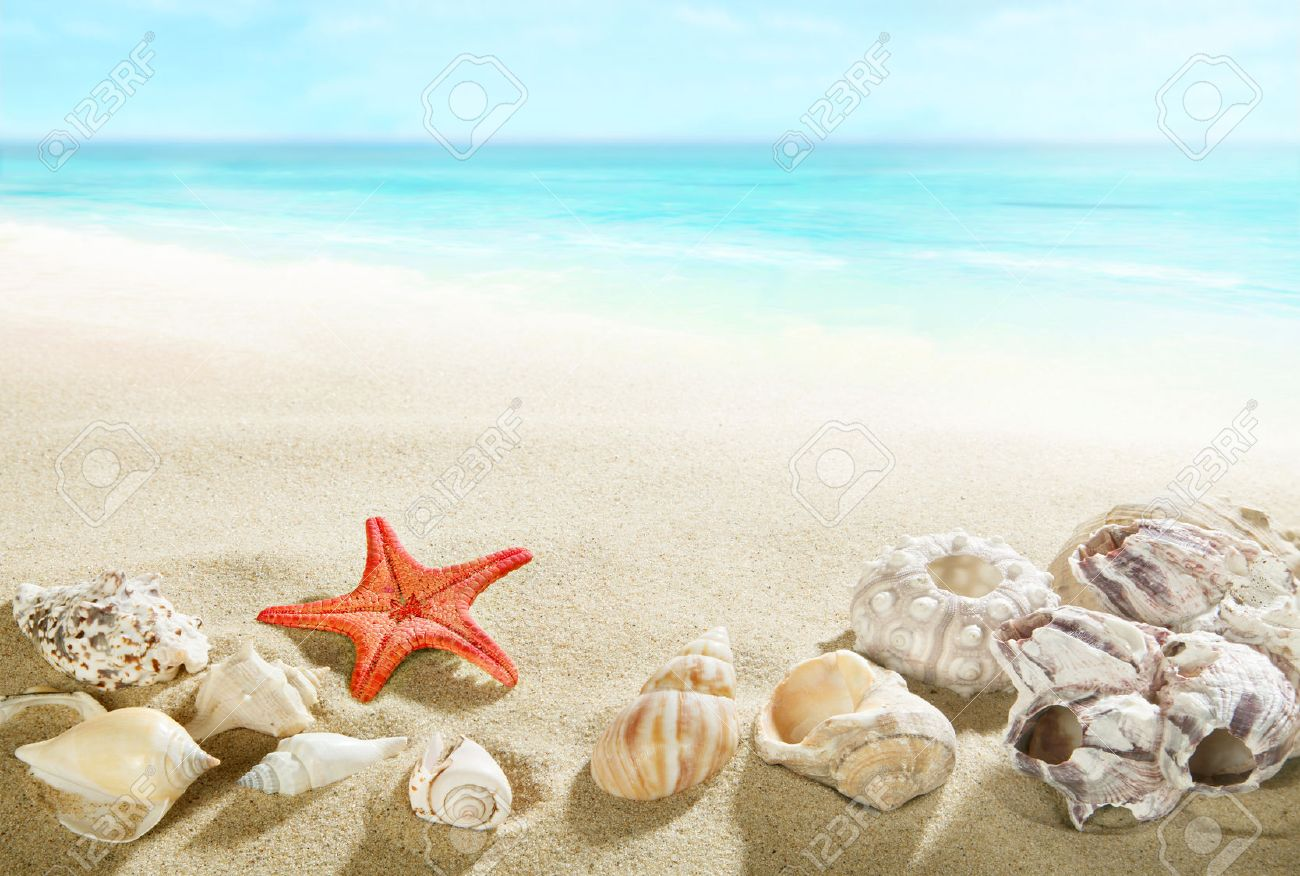 Shells on the beach - 37452455