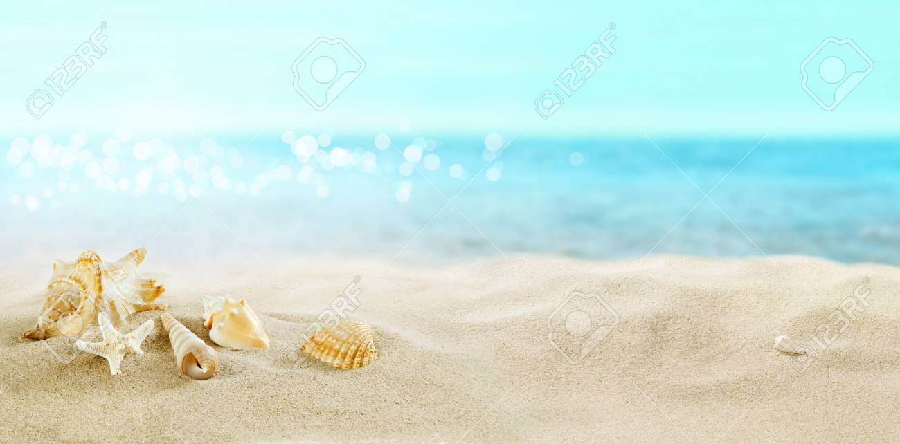 View of the sandy beach. Shells in the sand. - 123169336