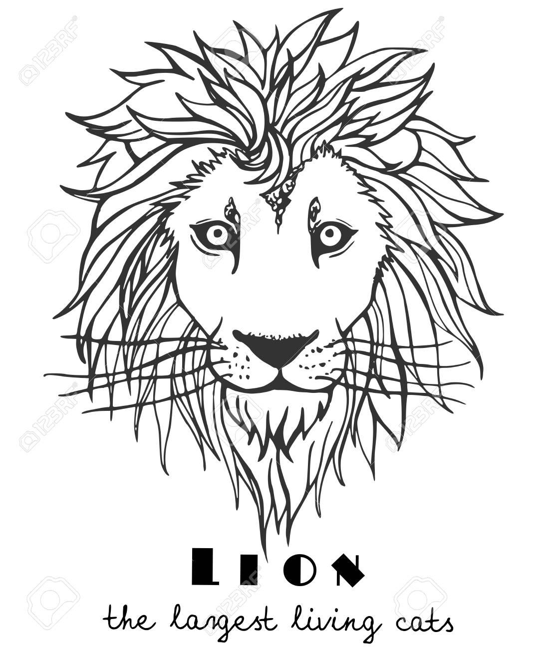 Ilustración De Una Cabeza De Los Leones Para Colorear Tatuajes Plantilla Diseño Impresión En La Camiseta Bolsa Portátil Tarjeta Aislado En Un